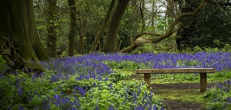 Counselling Psychotherapy and clinical supervision in Leicester represented by a wooden bench in a bluebell wood